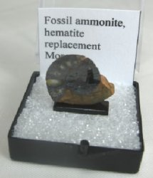Ammonite, hematite replacement