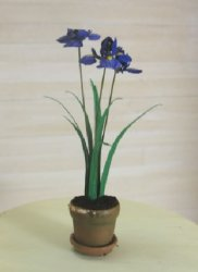 Iris in Clay Pot, Purple
