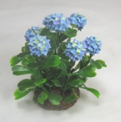 Blue Hydrangea Bush in Dirt