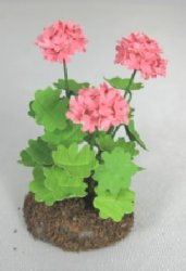 Geraniums in Dirt