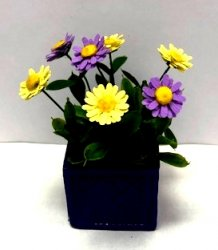 Purple Zinnias in Square Pot and Yellow