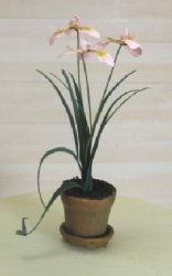 Iris in Clay Pot, Pink
