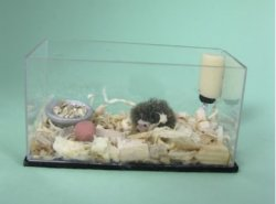 Hedgehog in Tank