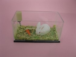 Pet Rabbit in Tank